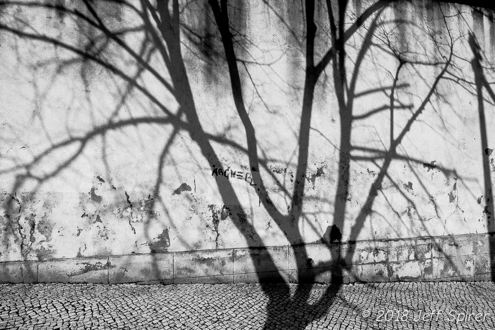 Lisbon Tree Shadow